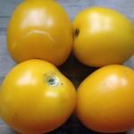 Nelkenwurs roter, Brombeere mit Kürbis, Tomate gelbe Königin